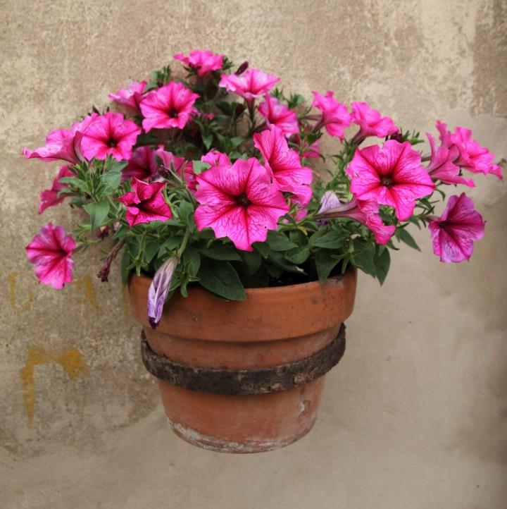 Balkon W Domu Jednorodzinnym: Najlepsze Kwiaty Na Balkon