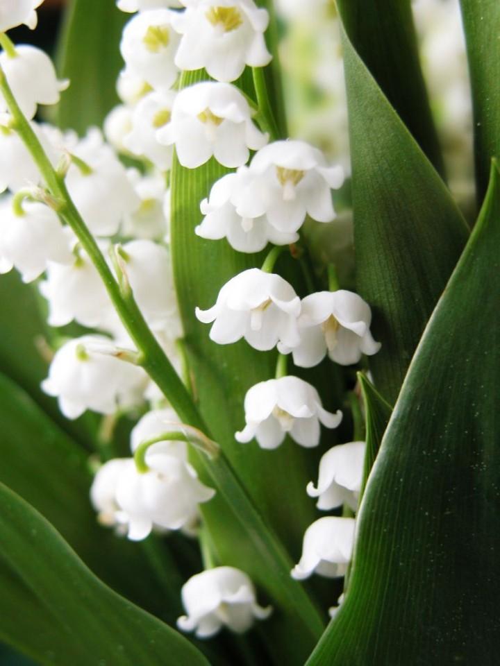 Biale Kwiaty Galeria Ogrod Ogrod I Kwiaty Infor Pl