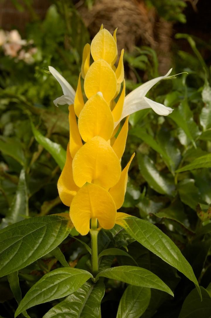 Zolte Kwiaty Galeria Ogrod Ogrod I Kwiaty Infor Pl